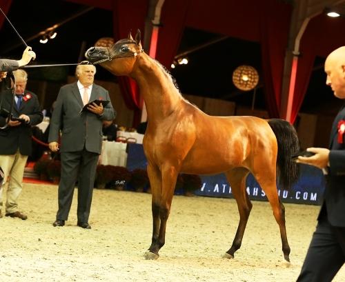 Mounira J European 2014