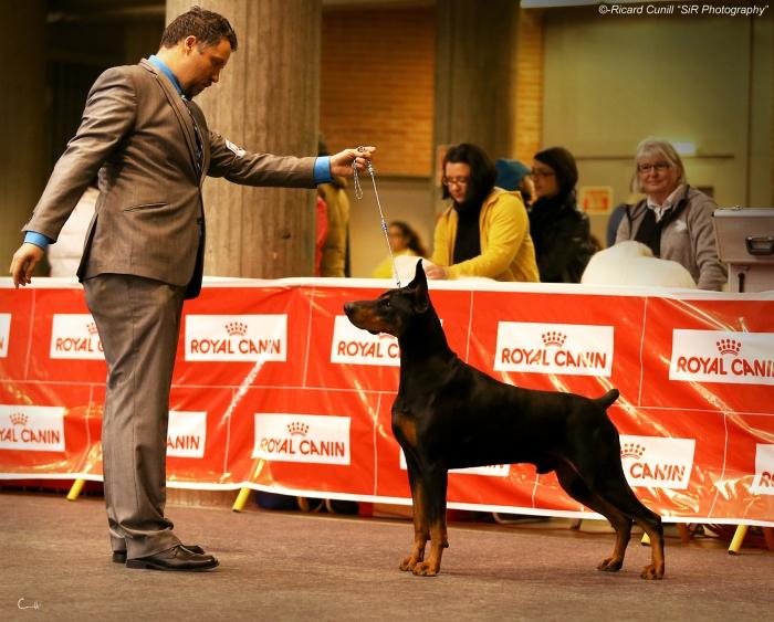 Girona Caninacatalana 2015 01