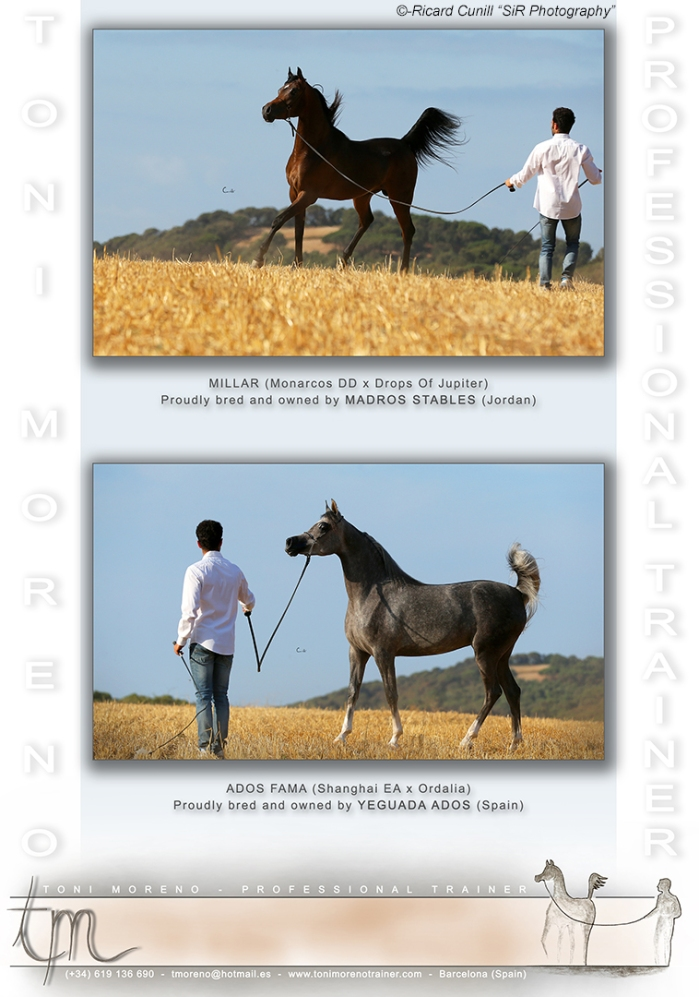 Anuncio Catalogo Nacional 2015_Toni Moreno