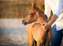 Filly foal (x Etna EA) con Bernat Tolrà